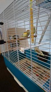 Mutation vogel
