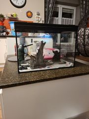 Aquarium 84l Komplettset Deko