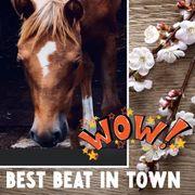 Quarter Horse Stutfohlen Spat Olena