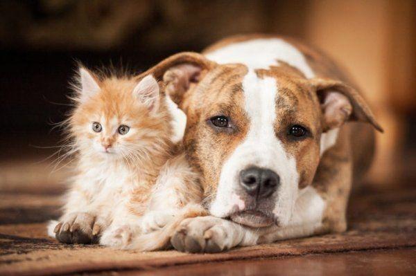 Hunde und Katzenbetreuung