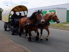 Schönes Gespann Arbeitspferde: Kleinanzeigen aus Buttstädt - Rubrik Pferde