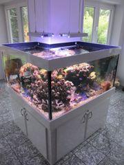 Meerwasseraquarium Seewasseraquarium Salzwasseraquarium komplett Nur