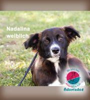 Nadalina - ein bezauberndes freundliches Mädchen