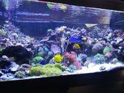 meerwasser Korallen Nachzuchten