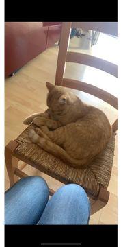 Rentnerin mit Katze sucht 2-3