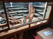Reserviert Terrarium mit Leopardgecko 120x60x60