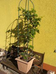 Für Balkon Terrasse und Garten