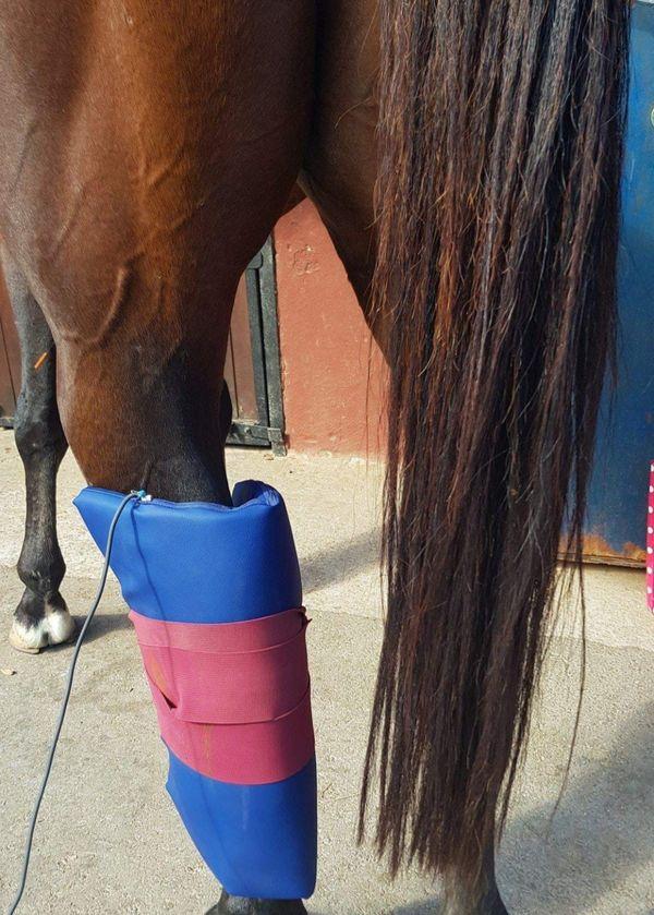 Weinachte und Pferdegesundheit verschenken