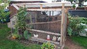 Hühnergehege 8 Hühner