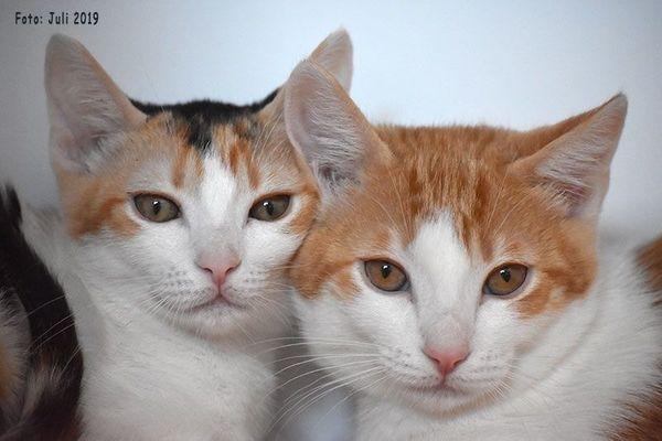 6 junge Kätzchen paarweise zu