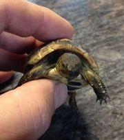 Schildkröten von klein bis groß