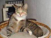 Katzensitting bei Ihnen Zuhause