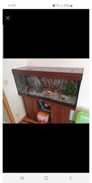 240 liter Aquarium von juwel