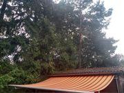 Markise Gelenkarm 4 Meter breit