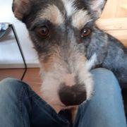 Suche liebevolle zuverlässige Hundebetreuung
