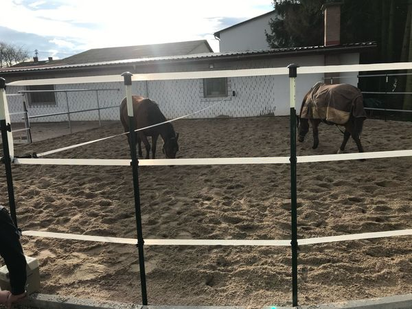 Box pferdebox zu vermieten Stall