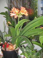 schöne zimmerpflanzen günstig