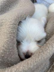 Kleinbleibender Hund gesucht