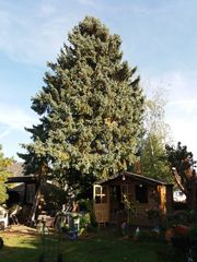 Baumfällungen - Baumfällarbeiten - Entsorgung