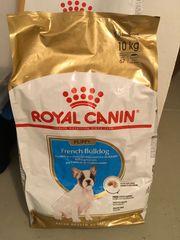NEU - French Bulldog Puppy Royal