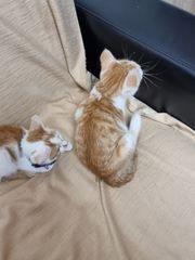 Katzen Babys Kitten