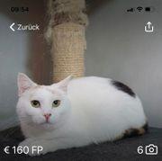 Katze 10 Monate