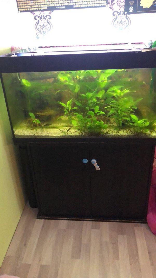 Fische & Aquarien Haustierbedarf Aquarium 200l Komplett Mit Unterschrank Und Zubehör
