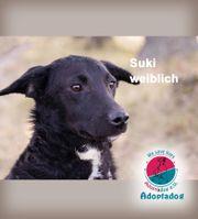 Suki - Magst du meine Segelohren