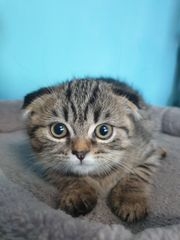 Sehr süße Katzen