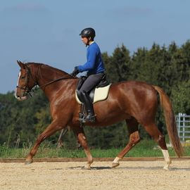 Beritt Ganzheitliche Ausbildung deines Jungpferdes: Kleinanzeigen aus Rot - Rubrik Pferdeboxen, Stellplätze