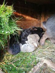 Mix Kaninchen