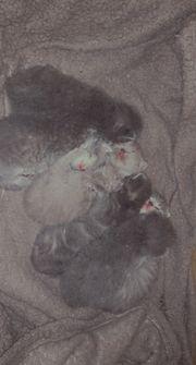 bkh kitten bald abzugeben