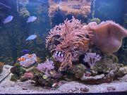 Meerwasserquarium RED SEA Reefer 250