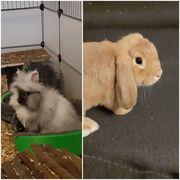 Kaninchen- wegen Allergie zu verkaufen