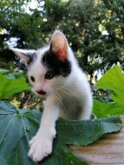 Kitten Katzenbaby Handaufzucht
