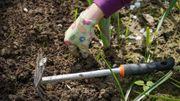 Suche Hilfe für Gartenarbeit in