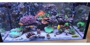 Korallen SPS LPS Weichkorallen