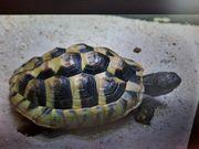 Landschildkröte in 85625 Glonn entlaufen
