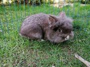 kastrierte Kaninchen auch bei Corona