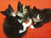 Süße Babykatzen