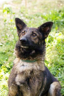 Luna - Möchte mit dir viel: Kleinanzeigen aus Kirchzell - Rubrik Hunde
