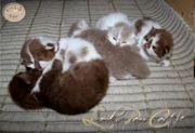 BLH katzen-Babys Hunde gewohnt suchen
