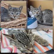 Kitten Baby Katze Helena geimpft