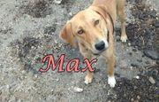 Traumhund Max sucht sein Zuhause