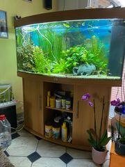 Aquarium 350 l