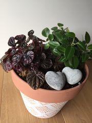 Pflanzen im XXL Terrakotta Topf
