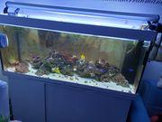 Aquarium 450l wie neu