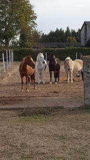Stallplatz Kleinpferd oder Pony frei