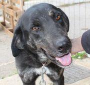 Preto - großer schwarzer Hundeschatz bisher
