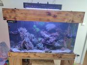 Meerwasser Aquarium komplett 250l mit